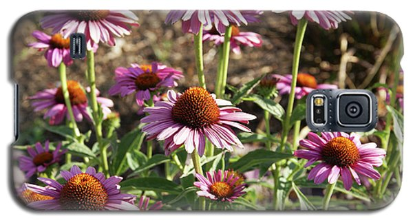 Echinacea Galaxy S5 Case by Cynthia Powell