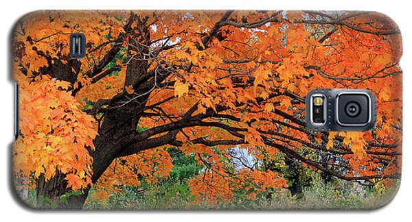Edna's Tree Galaxy S5 Case