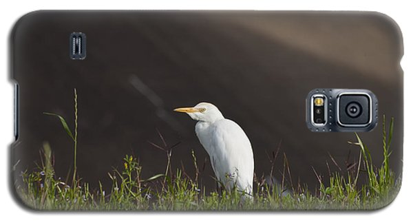 Galaxy S5 Case featuring the photograph Egret In The City by Joshua House