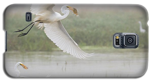 Egrets Fish Galaxy S5 Case by Kelly Marquardt