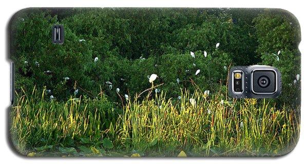 Egrets Nesting Galaxy S5 Case