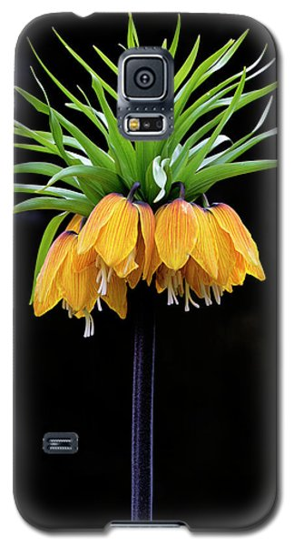 Galaxy S5 Case featuring the photograph Elegance by Elvira Butler