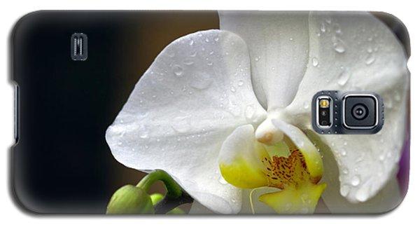 Elegance In White Galaxy S5 Case
