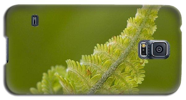 Elegant Fern. Galaxy S5 Case by Clare Bambers