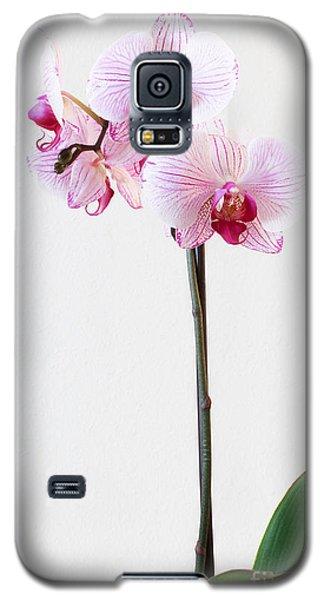Elegant Orchid Galaxy S5 Case by Anita Oakley