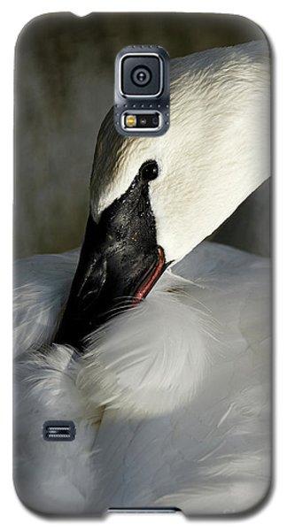 Elegant Trumpeter Swan Galaxy S5 Case