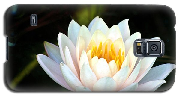 Elegant White Water Lily Galaxy S5 Case