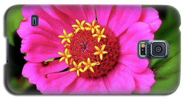 Elegant Zinnia Flower Pink Tones Galaxy S5 Case