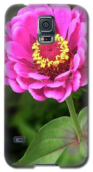 Elegant Zinnia Soft Glow Galaxy S5 Case