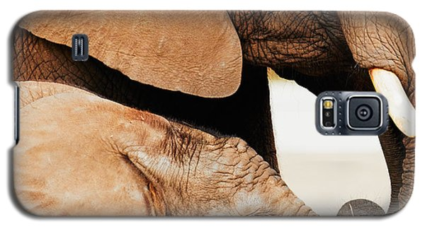 Elephant Calf And Mother Close Together Galaxy S5 Case