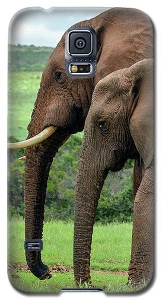 Elephant Couple Profile Galaxy S5 Case