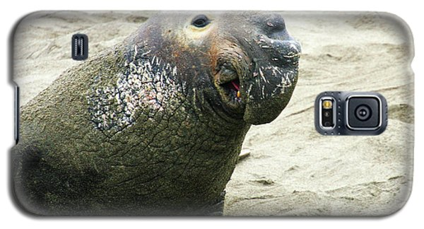 Galaxy S5 Case featuring the photograph Elephant Seal by Anthony Jones