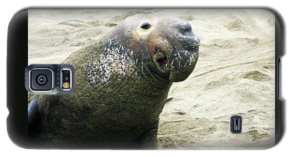 Elephant Seal Galaxy S5 Case