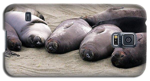 Elephant Seals Galaxy S5 Case