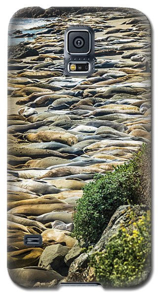 Elephant Seals Pierdras Blancas Galaxy S5 Case