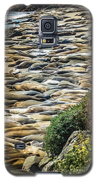 Elephant Seals Pierdras Blancas Galaxy S5 Case