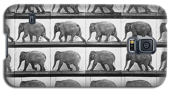 Elephant Walking Galaxy S5 Case