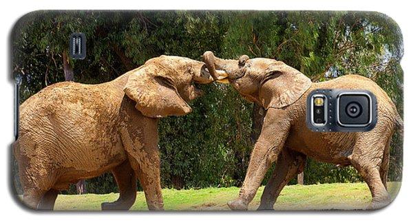 Elephants At Play 2 Galaxy S5 Case