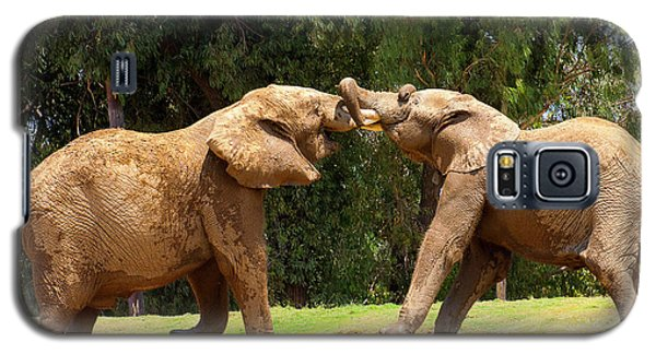 Elephants At Play 2 Galaxy S5 Case