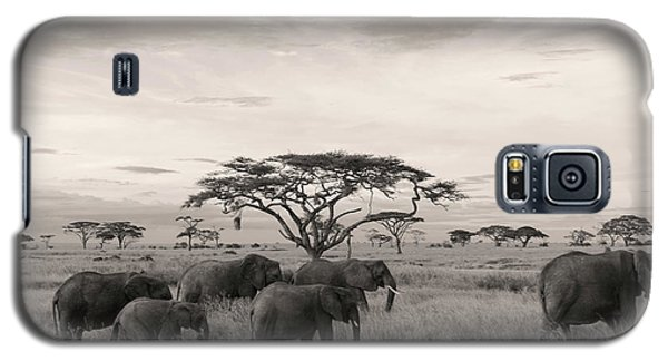 Elephants Galaxy S5 Case