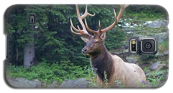 Galaxy S5 Case featuring the photograph Elk 4 by Gary Lengyel