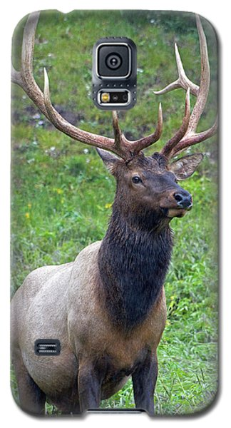 Galaxy S5 Case featuring the photograph Elk 5 by Gary Lengyel