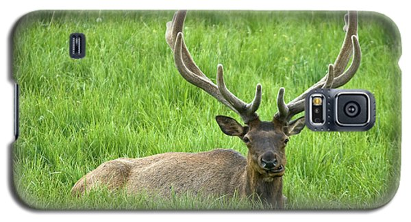 Galaxy S5 Case featuring the photograph Elk 6 by Gary Lengyel