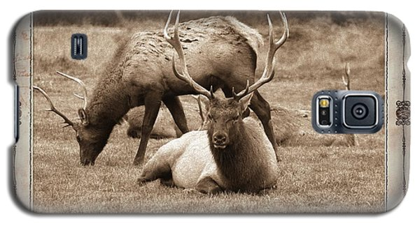 Galaxy S5 Case featuring the photograph Elk by Athala Carole Bruckner
