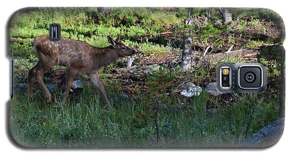 Baby Elk Rmnp Co Galaxy S5 Case
