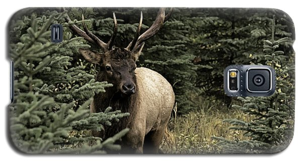 Elk Bull Galaxy S5 Case by John Gilbert