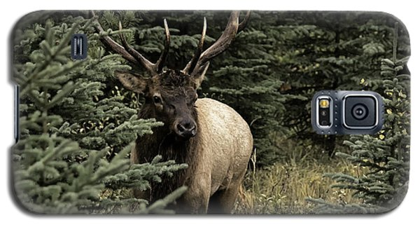 Elk Bull Galaxy S5 Case