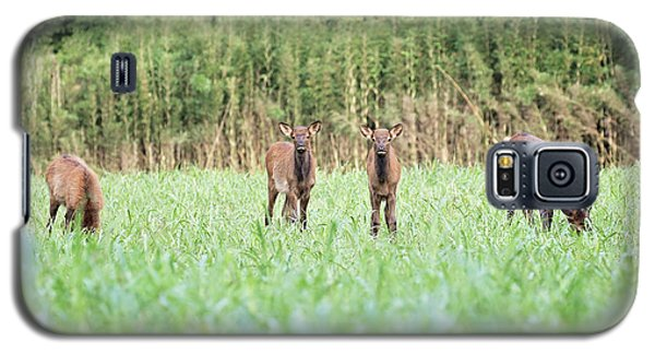 Elk Calves Galaxy S5 Case