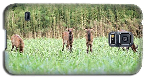 Elk Calves Galaxy S5 Case