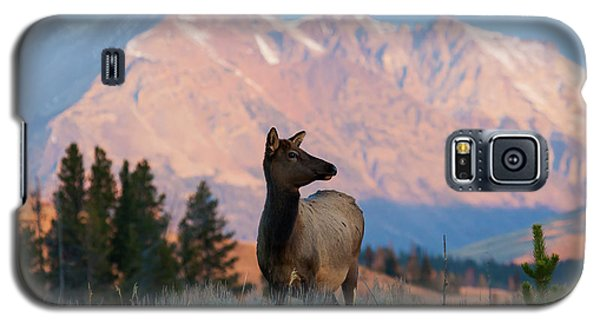 Elk Majesty Galaxy S5 Case