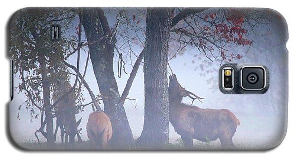 Elk Neck Scratch Galaxy S5 Case by Lamarre Labadie