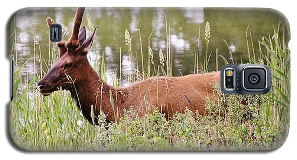 Elk Of Jasper... Galaxy S5 Case
