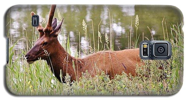 Elk Of Jasper... Galaxy S5 Case