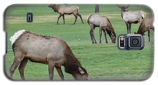 Elk On Golf Course Estes Park Colorado Galaxy S5 Case