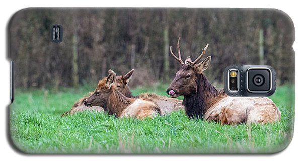 Galaxy S5 Case featuring the photograph Elk Relaxing by Paul Freidlund