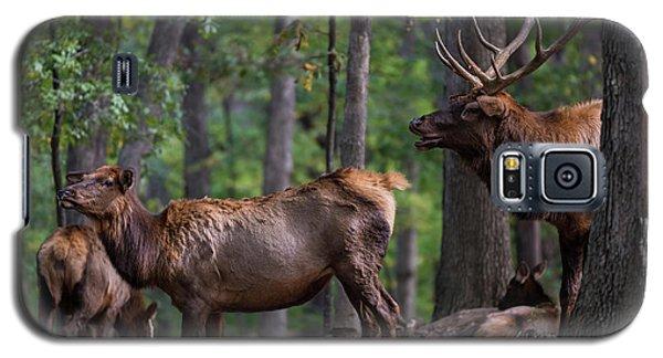 Elk Romance Galaxy S5 Case