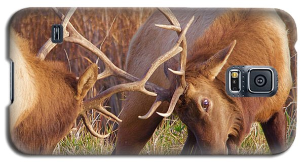 Galaxy S5 Case featuring the photograph Elk Tussle by Todd Kreuter