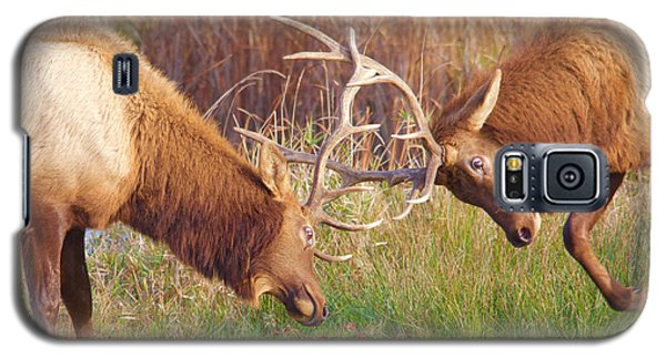 Galaxy S5 Case featuring the photograph Elk Tussle Too by Todd Kreuter