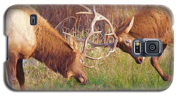 Elk Tussle Too Galaxy S5 Case by Todd Kreuter