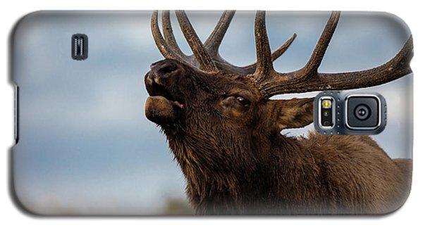 Elk's Screem Galaxy S5 Case