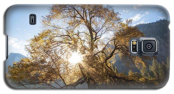 Elm Tree  Galaxy S5 Case