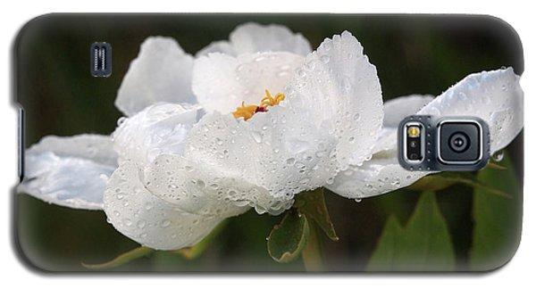 Embracing The Rain - White Tree Peony Galaxy S5 Case by Gill Billington