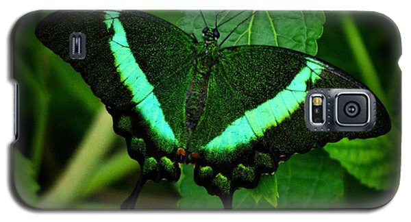 Emerald Swallowtail Galaxy S5 Case