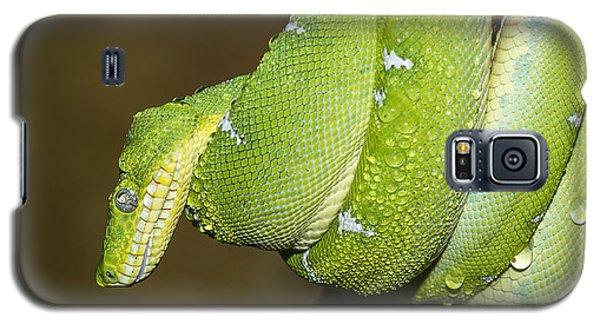 Emerald Tree Boa Galaxy S5 Case