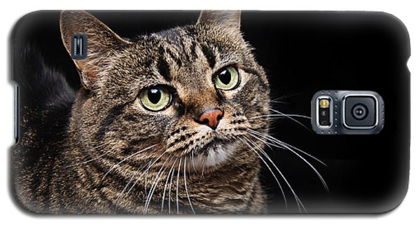 Emmy The Cat Ponder Galaxy S5 Case