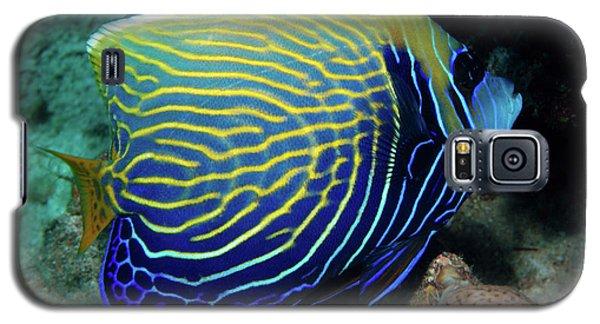 Emperor Angelfish, Red Sea 1 Galaxy S5 Case